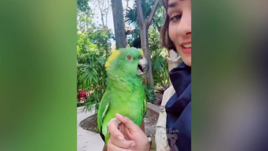 Parrot Talking - Smart And Funny Parrots Video